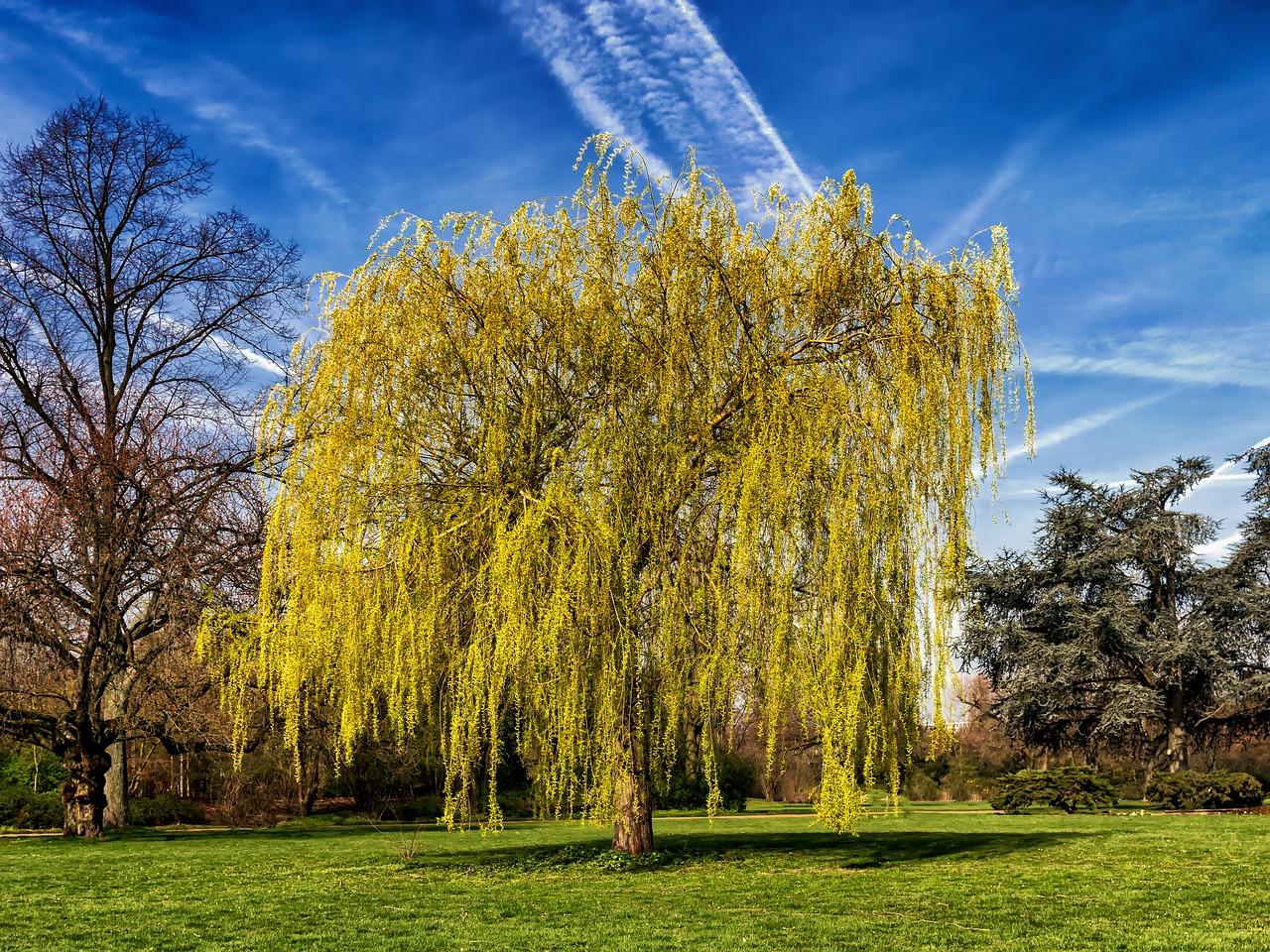 Los Mejores Arboles De Sombra Para Tu Jardin - Suelos-para-jardines-pequeos
