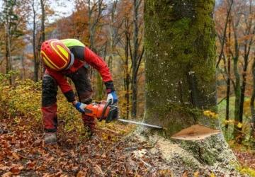 Uso forestal