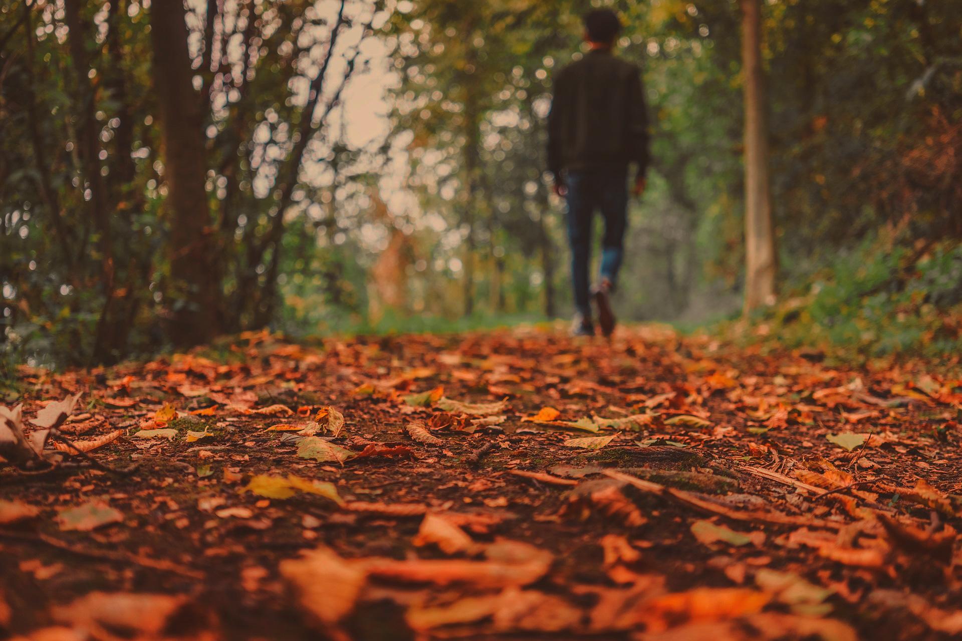 Consejos para cuidar el jardín en otoño