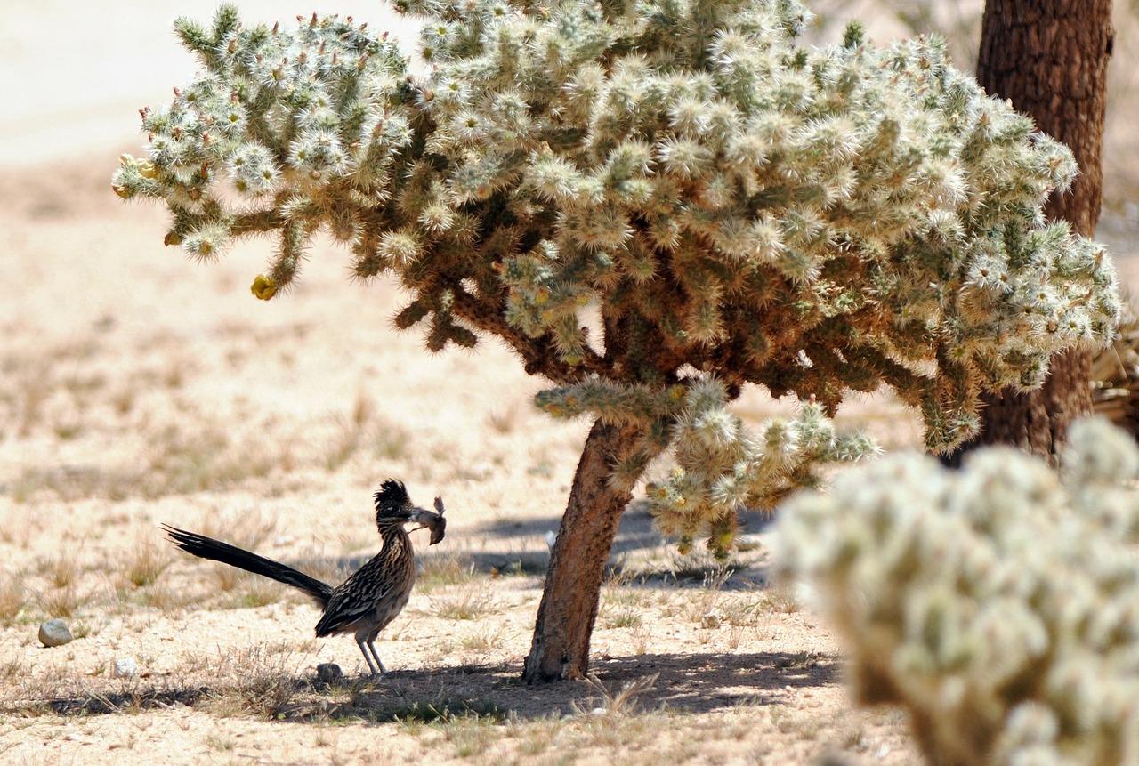 Los mejores árboles de sombra para tu jardín